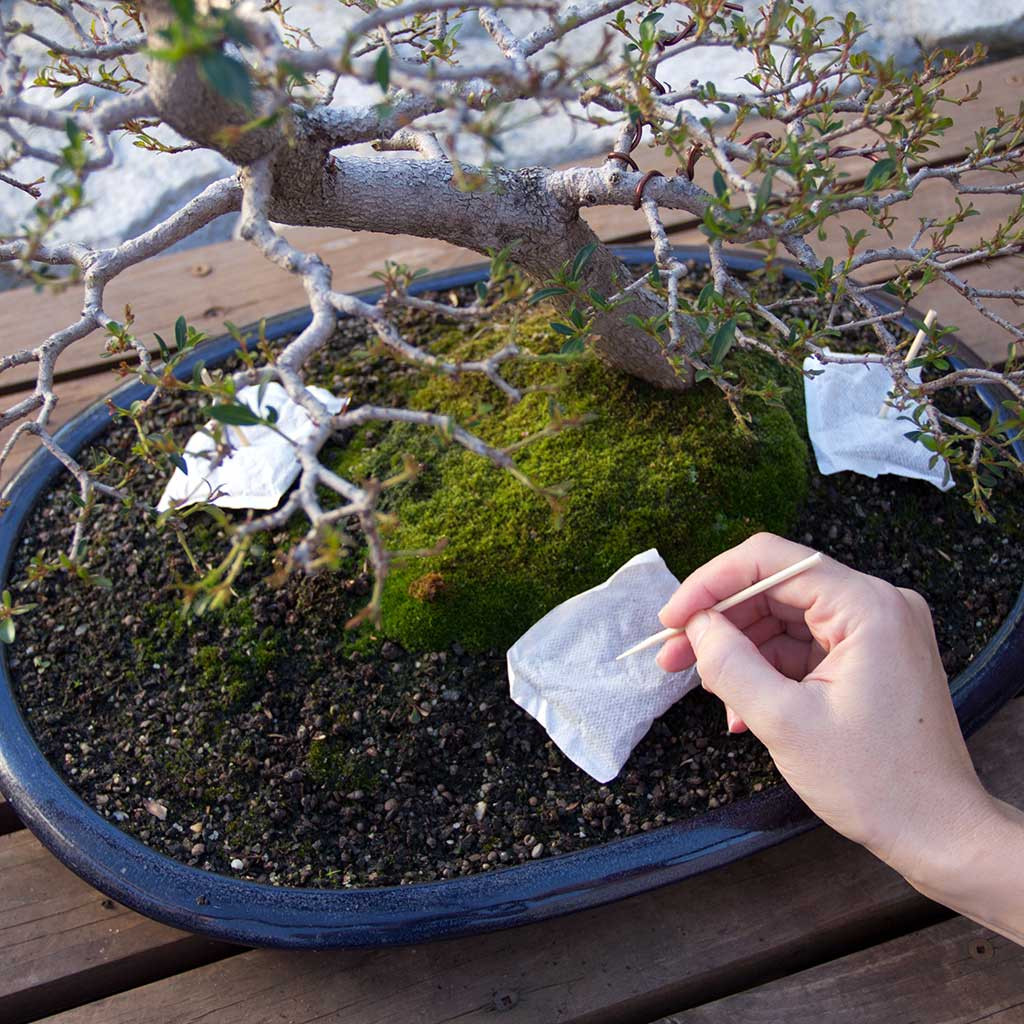 Bonsai Tree Liquid Fertilizer Bonsai Tree